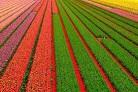 Agroindustria >>>